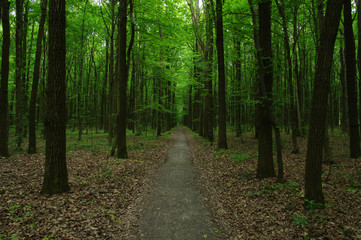 Trees in green forest