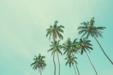 Coconut palm trees vintage filtered