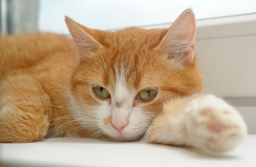 Redhead with a white cat on the windowsill