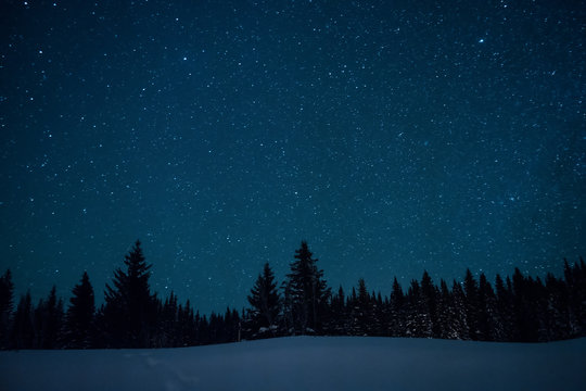Christmas trees on the background of the starry winter sky.