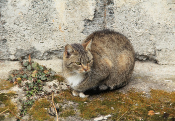 fluffy gray cat hunked down next to the old wall