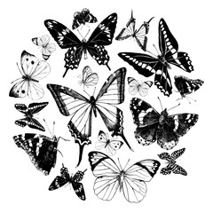 Hand drawn butterflies set. Vector illustration