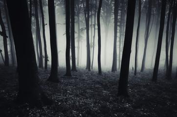 dark forest background, Halloween scary atmosphere