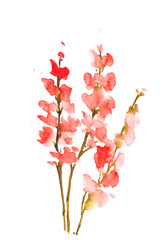 Red flowers on white, watercolor illustrator