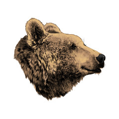 the bear's head profile looking into the distance, sketch vector graphics, colored drawing