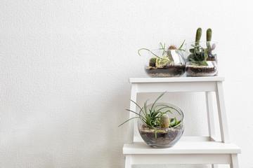 Succulent gardens in glass vases on step ladder