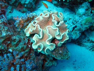 Beautiful Corals in the Red Sea