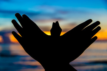 Freedom sign hand freedom symbol bird hand in sunset