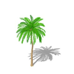 Palm tree. Isolated on white background.  Cartoon style.