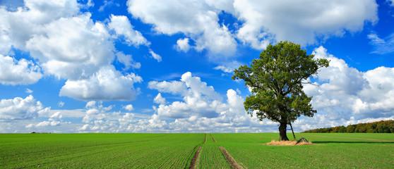 Wall Mural - Große alte Eiche, grünes Feld, blauer Himmel, weiße Wolken