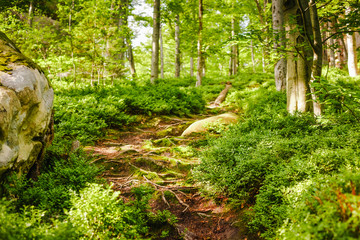 Beautiful forest mountain path