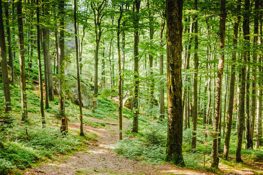Green Forest. nature green wood background