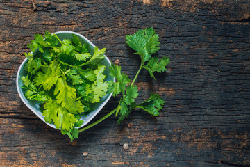 Coriander leaves, fresh green cilantro on wooden background, Food herbal aroma ingredient on dark wood.