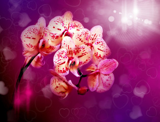 Beautiful flowers pink orchids