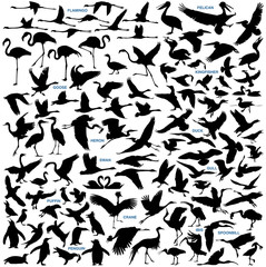 Water Birds vector silhouettes collection