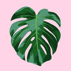 Monstera Tropical Leaf Illustration