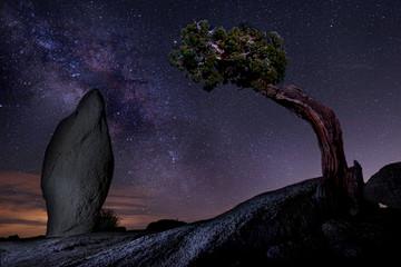Milky Way Over a Juniper Tree in Joshua Tree National Park  USA