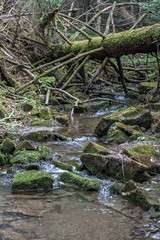 Forest stream of crystal water in the mountains of stones covered with moss and fallen trees.stream of crystal water, large rocks covered with green moss and fallen trees