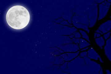 dead branches with fullmoon and star.winter.