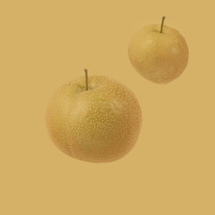 Two yellow Asian pears against yellow background