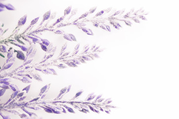 lavender flowers branch