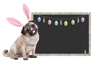 cute pug puppy dog with bunny ears diadem sitting next to blank blackboard sign with easter decoration, on white background