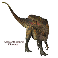 Acrocanthosaurus Dinosaur Tail - Acrocanthosaurus was a carnivorous theropod dinosaur that lived in North America in the Cretaceous Period.