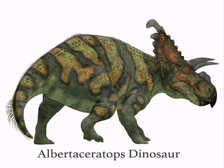 Albertaceratops Dinosaur Tail with Font - Albertaceratops was a herbivorous Ceratopsian dinosaur that lived in Alberta, Canada in the Cretaceous Period.