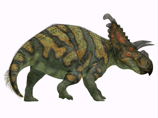 Albertaceratops Dinosaur Tail - Albertaceratops was a herbivorous Ceratopsian dinosaur that lived in Alberta, Canada in the Cretaceous Period.