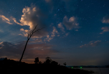 silhouette of dry tree in the night , with starry sky on background at thailand