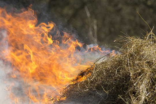Fire - burning dry grass