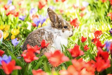 Frühling Blumen Kaninchen