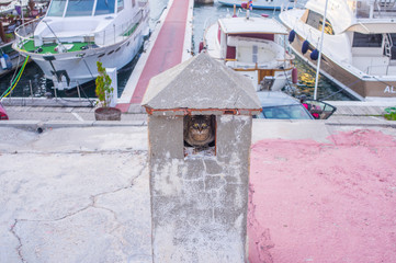 Wild cat hiding in the port of Sitges, Barcelona, Spain