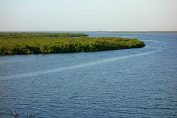 Mangrove forest in the Sine Saloum Delta, Senegal