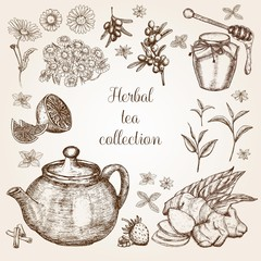 Hand drawn Herbal Tea collection in vintage style.