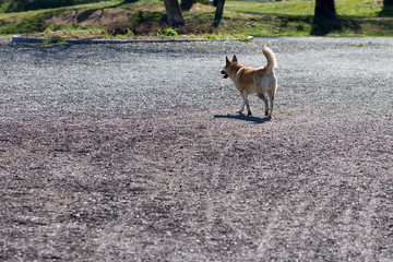Alone dog in a park on a gravel road
