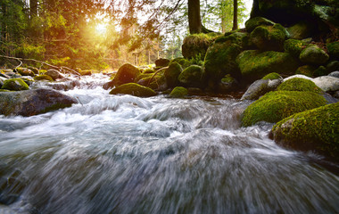 Forest brook in the Tatra mountain forest