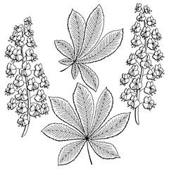 Chestnut flower leaf graphic black white isolated sketch illustration vector