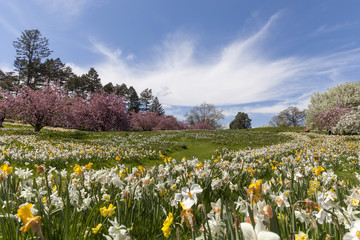 Blossoming garden during the spring