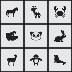 Set Of 9 Editable Animal Icons. Includes Symbols Such As Stallion, Sea Calf, Penguin And More. Can Be Used For Web, Mobile, UI And Infographic Design.