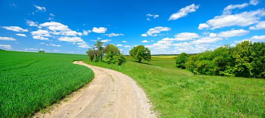 Wall Mural - Feldweg durch grüne Felder und Wiesen unter blauem Himmel im Frühling