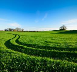 Fototapete - Traktorspur durch grünes Feld unter blauem Himmel, am Horizont ein Hügelgrab