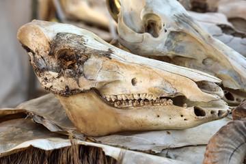 animal's skull on sacking background