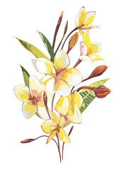 Tropical flowers plumeria isolated on white background. EPS 10