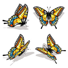 Collection of four beautiful machaon butterflies with realistic colors.