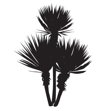 Silhouette of a large plant of a yucca