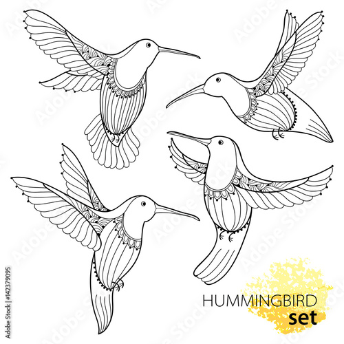 Vector Set With Flying Hummingbird Or Colibri In Contour Style Isolated On White Background Outline