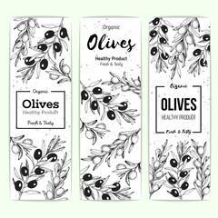 Olives banner set, hand drawn vector illustration. Healthy and organic food design template. Vintage style image. Engraved illustration