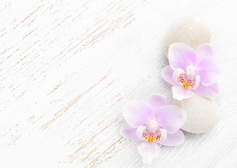 Two light pink orchids and stones on wooden shabby background