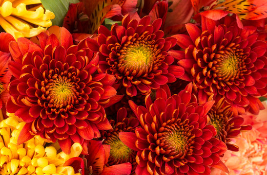 Flower background of red and yellow mums